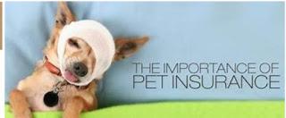 Прочитайте це, якщо ви розглядаєте Pet медичне страхування