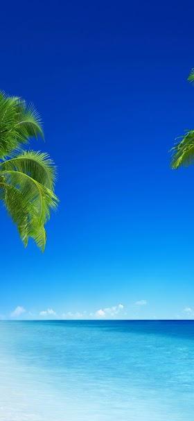 خلفية النخيل الإستوائي الساحر في الشاطئ الصافي
