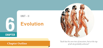 CLASS 12 BIOLOGY ZOOLOGY - CHAPTER 6 EVOLUTION - 1 MARK QUESTIONS - ONLINE TEST