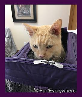 Carmine at the vet.