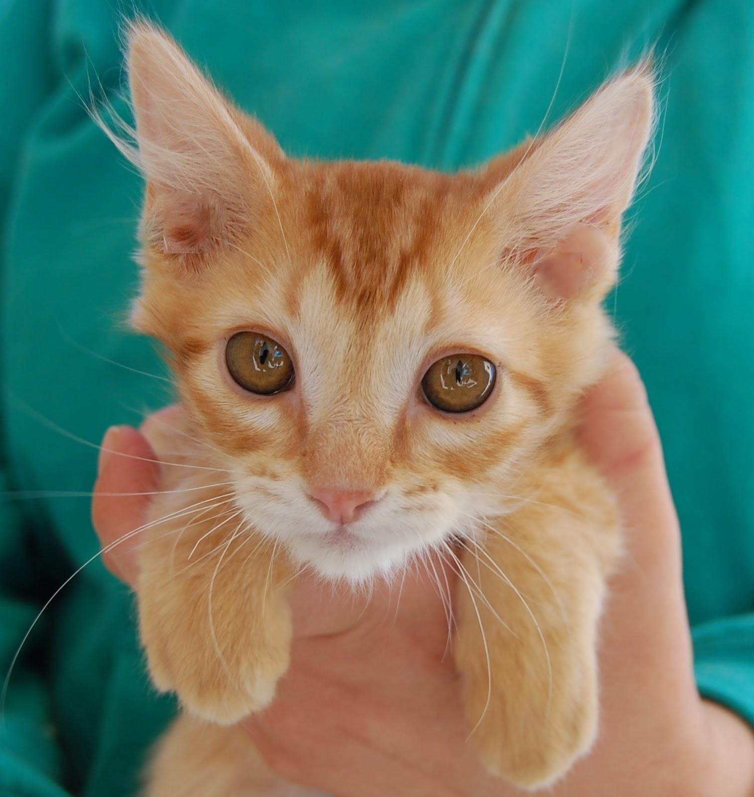 Rescued Kittens!   Kitten rescue, Heating company, Kittens
