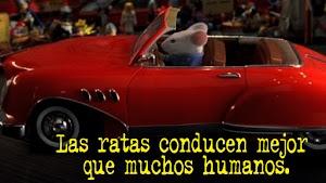 Las ratas conducen mejor que muchos humanos.