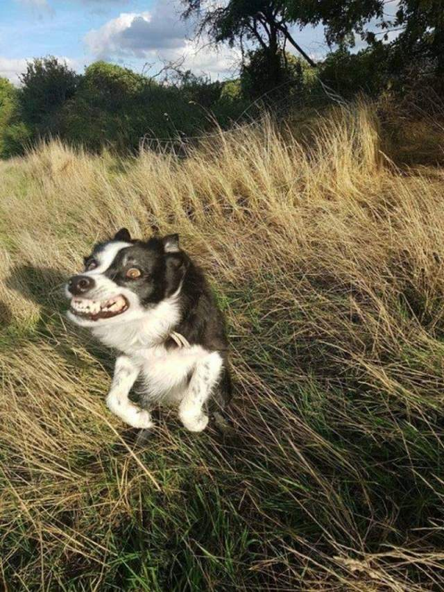 Cute dogs - part 249, funny dog picture, cute dog photos