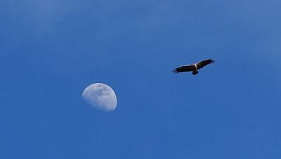 La lune et le rapace Sierra de Guara