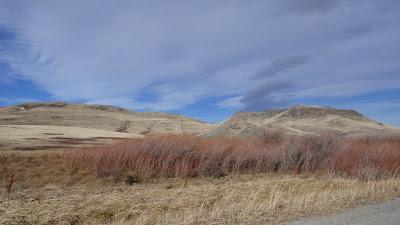 plants, Cascade, Montana, Mission Road