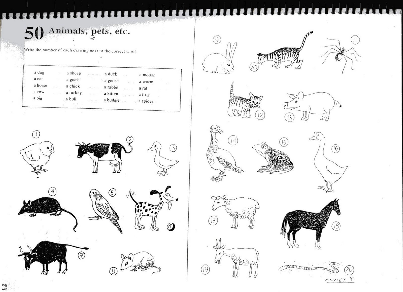 Primary School Teacher Fichas Animals