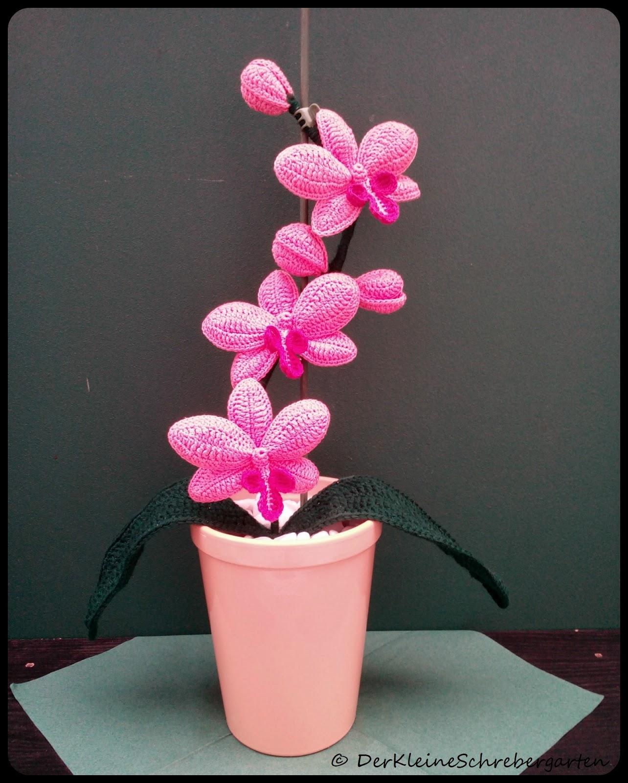 der kleine schrebergarten geh kelte orchideen. Black Bedroom Furniture Sets. Home Design Ideas