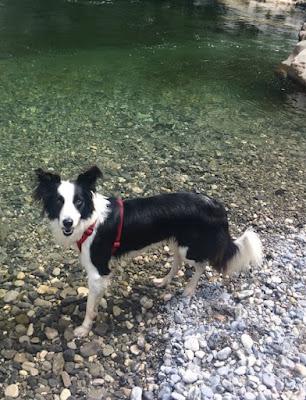 educateur chien canin annecy faverges ugine thones albertville