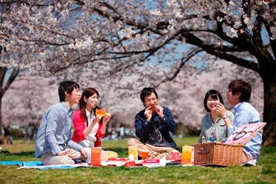 Serunya Piknik Saat Hanami Di Jepang