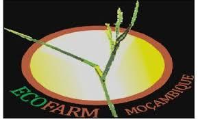 A Eco Farm Moçambique Lda, pretende recrutar para o seu quadro de pessoal um (1) Gestor de Armazem e Procurement no Distrito de Chemba.