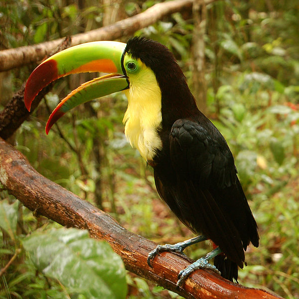 keel-billed-toucan-list-trend