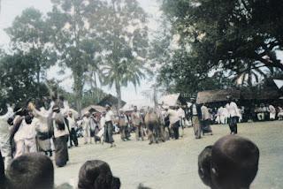 upacara adat batak pesta horja dengan menyembelih kerbau