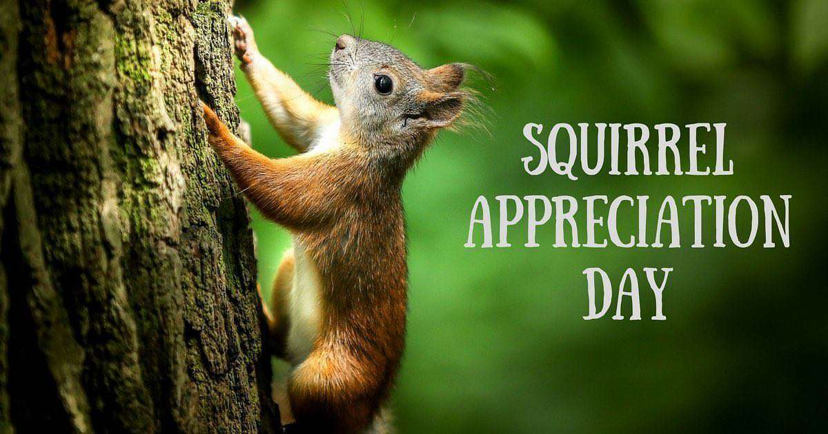 National Squirrel Appreciation Day Wishes Lovely Pics