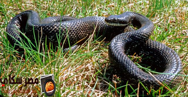 تعرف على 15 نوع من الثعابين الغير ضارة بالصور Snakes are not harmful