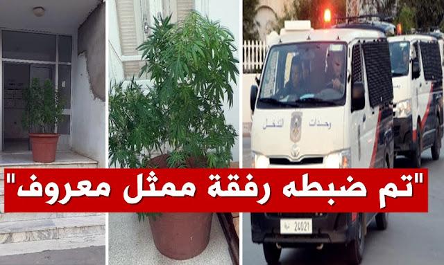 Ariana - Arrestation d'un jeune réalisateur - marijuana مخرج تلفزي تونسي يزرع الماريخوانا في منزله