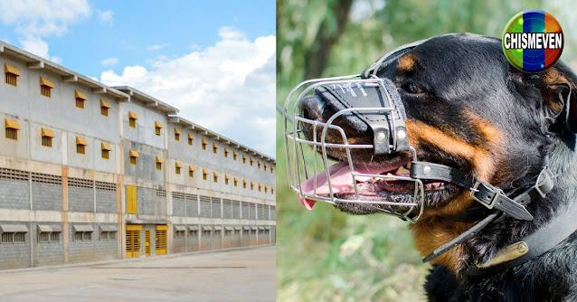 Reclusos se comieron a la mascota del director de la cárcel de Carabobo y fueron castigados