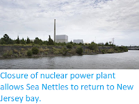 https://sciencythoughts.blogspot.com/2019/10/closure-of-nuclear-power-plant-allows.html