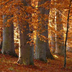 The three most commonly used types of natural wood