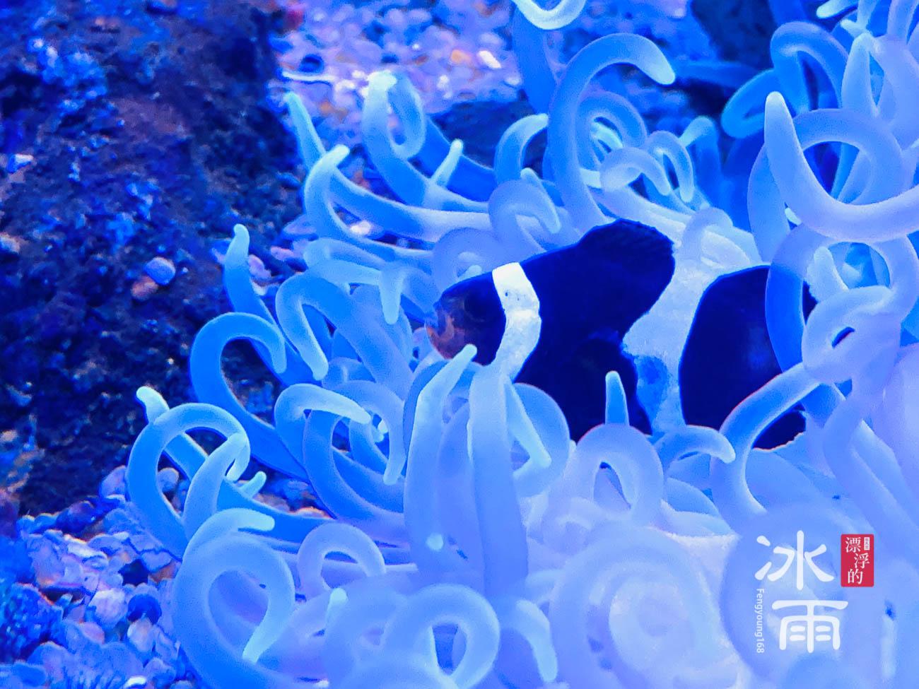 Xpark水族館|暖海生機