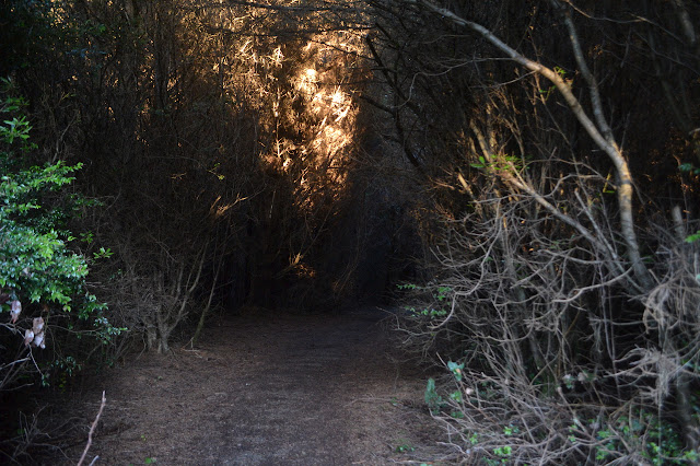 tunnel in tall brush