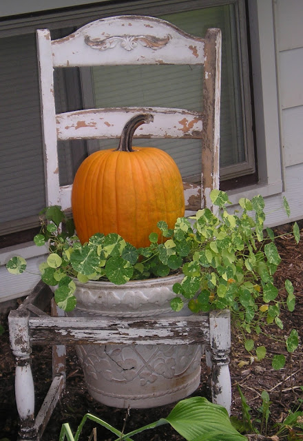 Pumpkin on nasturtiums