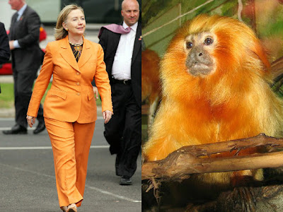 Monkey Hillary Clinton