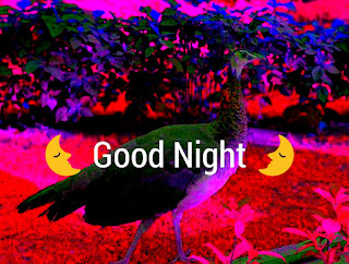 Latest Good Night Wallpapers 2020 New Good Night Images hd 2020
