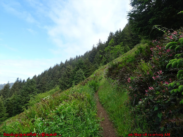 Elk Flats Trail Oregon Coast