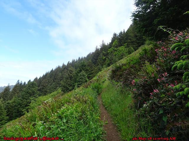 Elk Flats Trail Oregon Coast