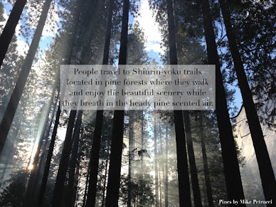 The health benefits of forest bathing or Shinrin-yoku.