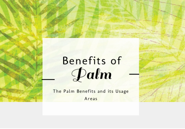 Palm Tree and Its Uses
