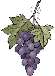 Gambar buah anggur vector