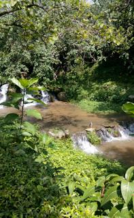 water in bird park