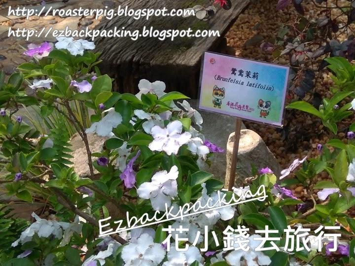 香港鴛鴦茉莉2021