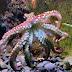 an octopus in Madeira Natural museum