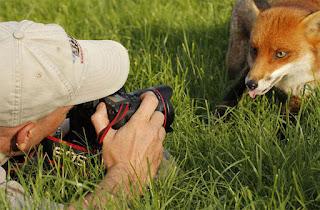 Consejos para fotografiar animales en la naturaleza
