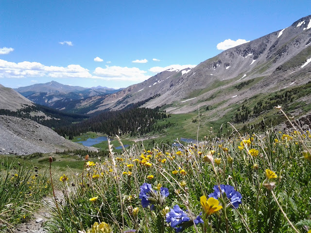 Top of a hiking trail with purple and yellow wildflowers all around with a small lake below.