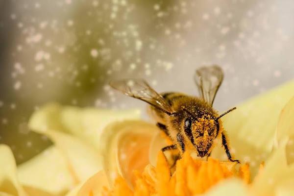 Οι μέλισσες έχουν αναμνήσεις!