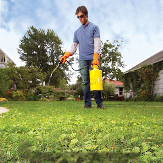 Lawn Health In Weed Control