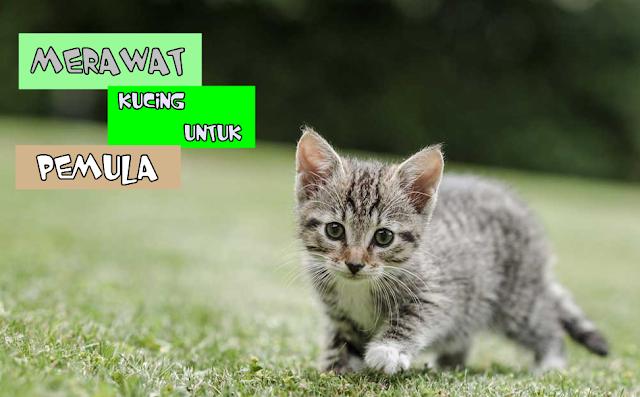 Apa Manfaat Memelihara Kucing Dirumah?