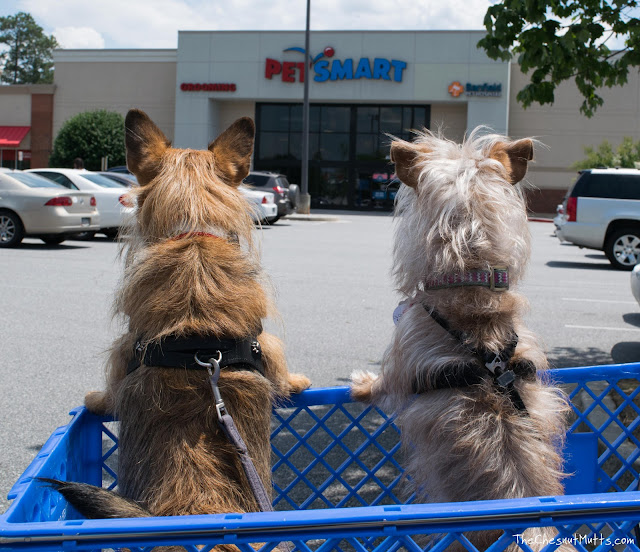 How to find a lost dog, talk to local pet stores, groomers, and veterinarians