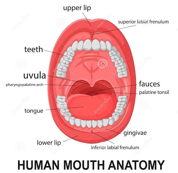 Saúde: 45% das doenças cardíacas começam na boca, alerta Incor