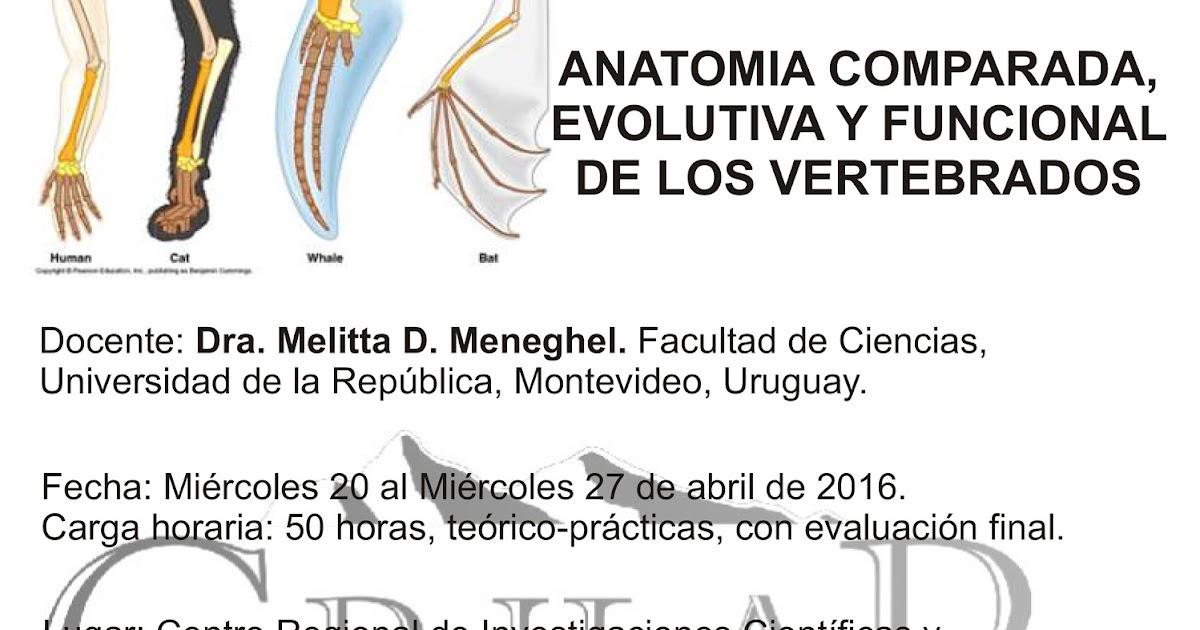Asociación Paleontológica Argentina: Curso Postgrado - Anatomia ...