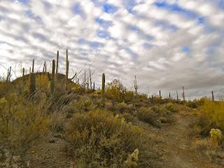 cool clouds over saguaro national park