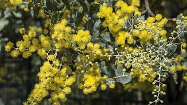 Follaje gris y flores amarillas. Los colores del año 2021 según Pantone