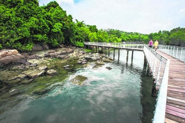 AN OASIS OF NATURE: A boardwalk on Pulau Ubin, a 10 sq km island near Singapore that the writer visited. Today, fewer than 50 Singaporeans live here, along with animals like red junglefowl, scaly-breasted munias, wild boars, Malayan water monitors and long-tailed macaques.