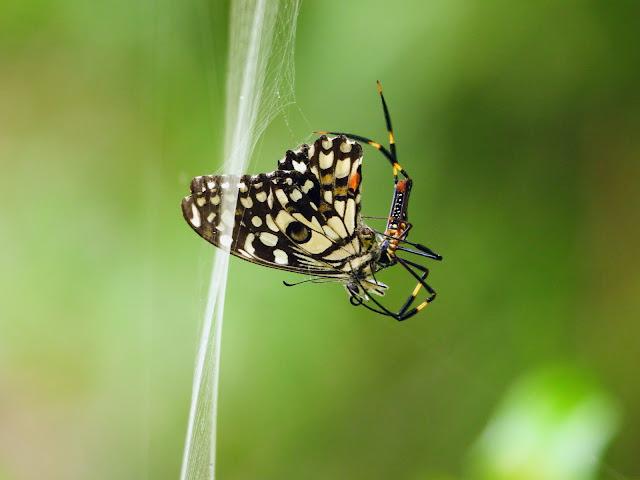 Butterfly Park Tadoba