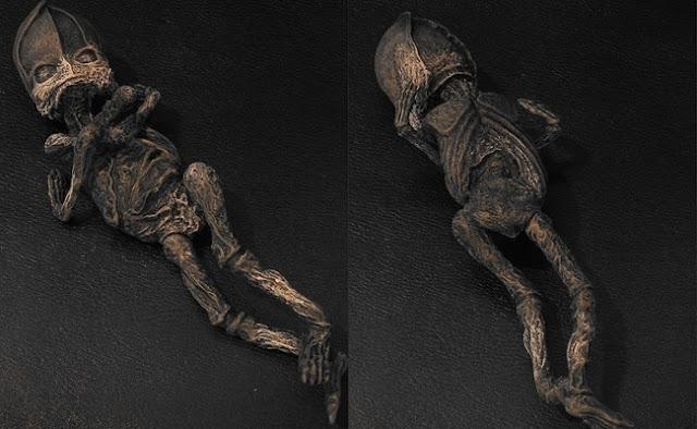 Người ngoài hành tinh ướp xác được phát hiện ở Nga, đang được nghiên cứu