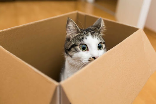 Why Your Cat Loves Boxes, According to Science