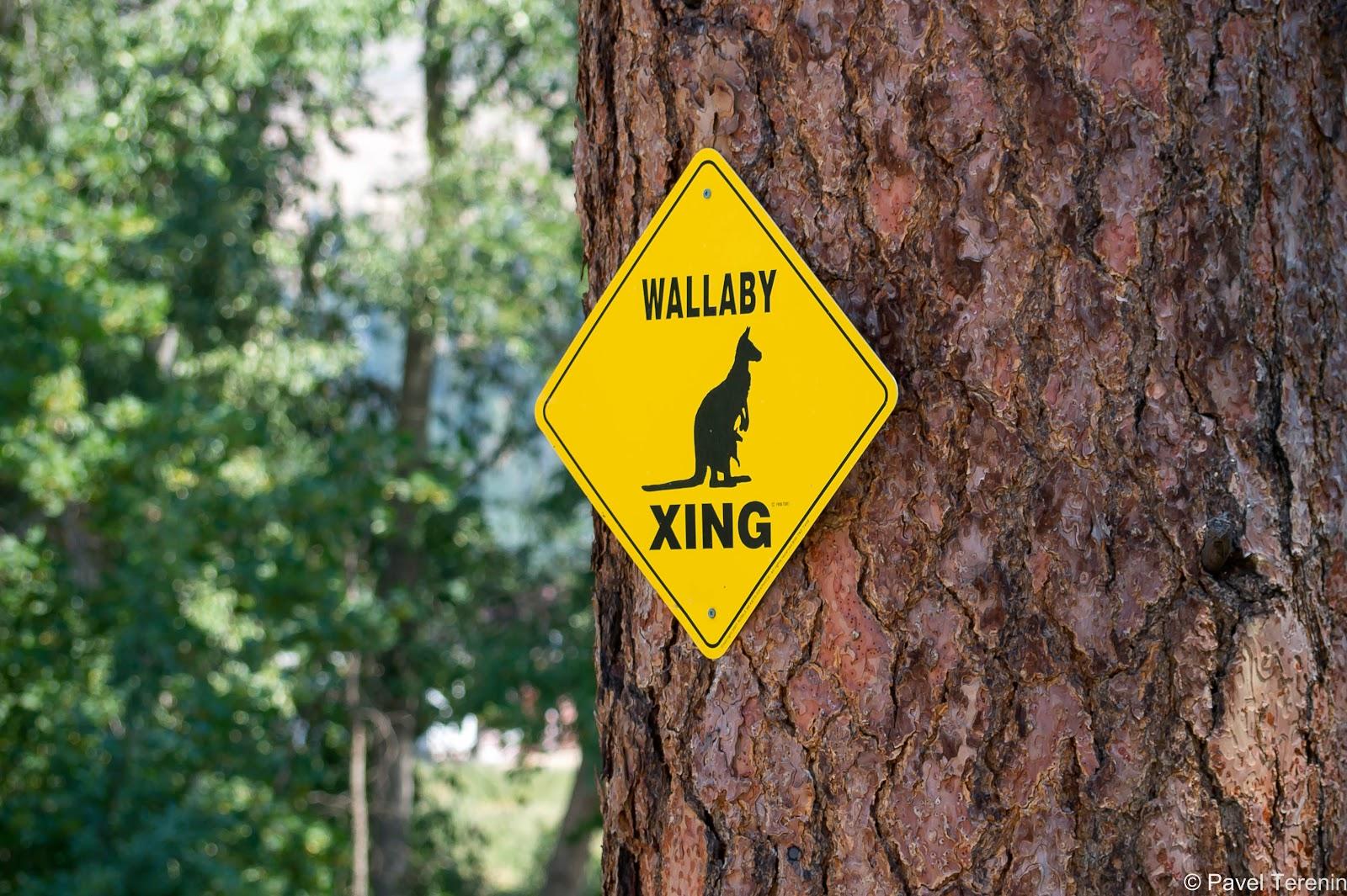 Выходцам из Австралии так хотелось привнести кусочек родины на канадскую землю, что они подумали, почему бы не разводить кенгуру здесь в Келоуне.